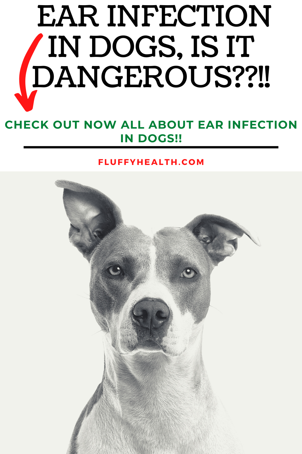 Symptoms-Of-Ear-Infection-In-Dogs