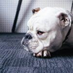 Do Dogs Get Lonely - Signs Your Dog Feeling Lonely