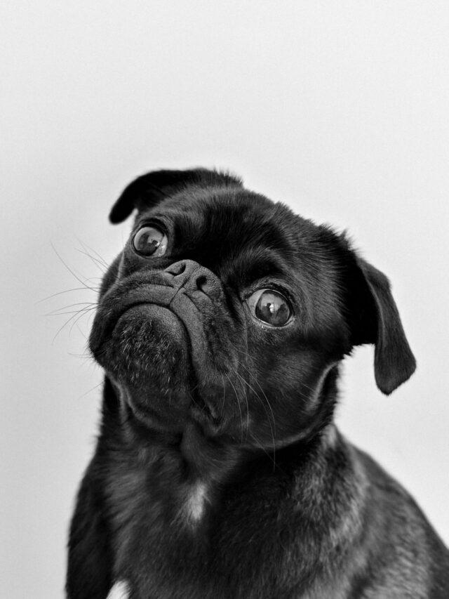 home-remedy-dog-diarrhea