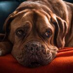 What Is Diabetes In Dogs - Signs Your Dog Has Diabetes