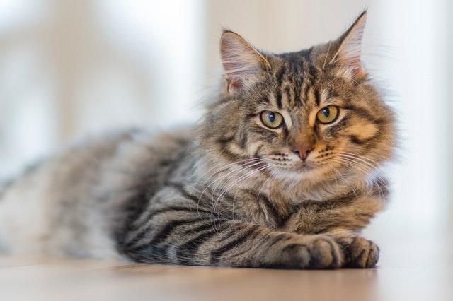 What-Is-Feline-Leukemia