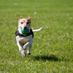 Ataxia In Dogs - All You Need To Know About Loss Of Balance In Dogs