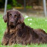 Do Dogs Get Leptospirosis - The Dangerous Truth About Leptospirosis In Dogs
