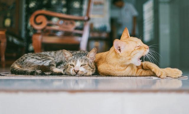 Treatment-For-Feline-Leukemia