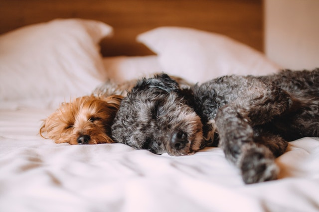Signs-Of-Kennel-Cough-In-Dogs