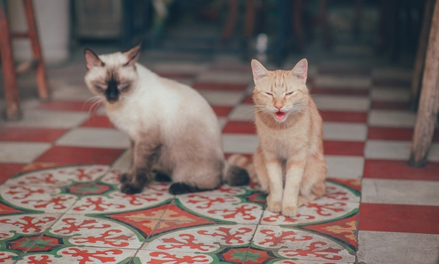 What-Is-Cystitis-In-Cats