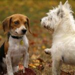 Signs Of Kennel Cough In Dogs - All You Need To Know About Kennel Cough In Dogs