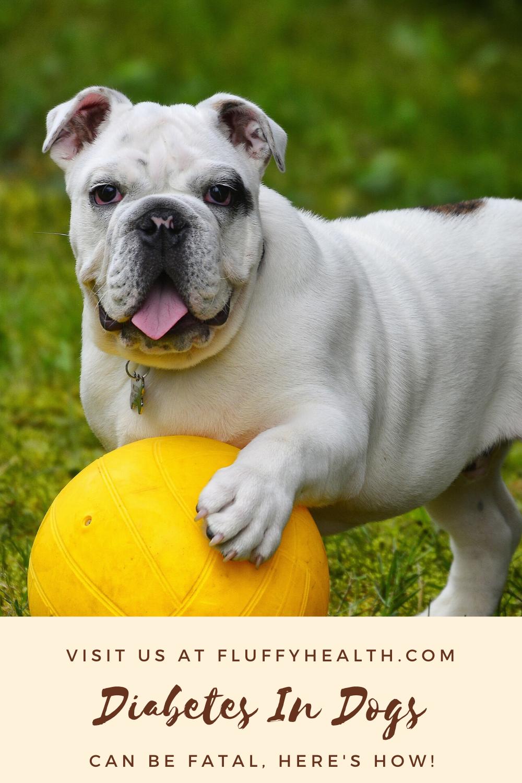 Symptoms-Of-Diabetes-In-Dogs
