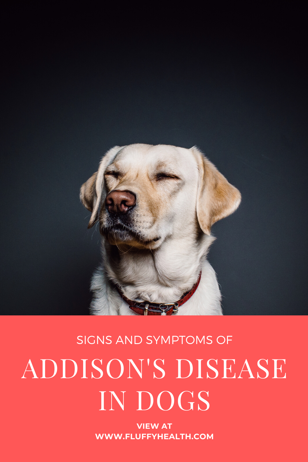 Addison's Disease For Dogs