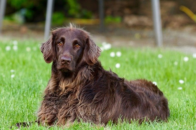 Symptoms-of-Distemper-in-dogs