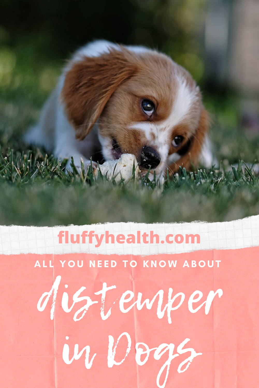 What-Is-Distemper-In-Dogs