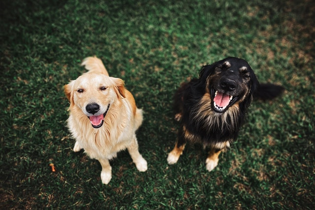 Signs-And-Symptoms-Of-Lyme-Disease-In-Dogs