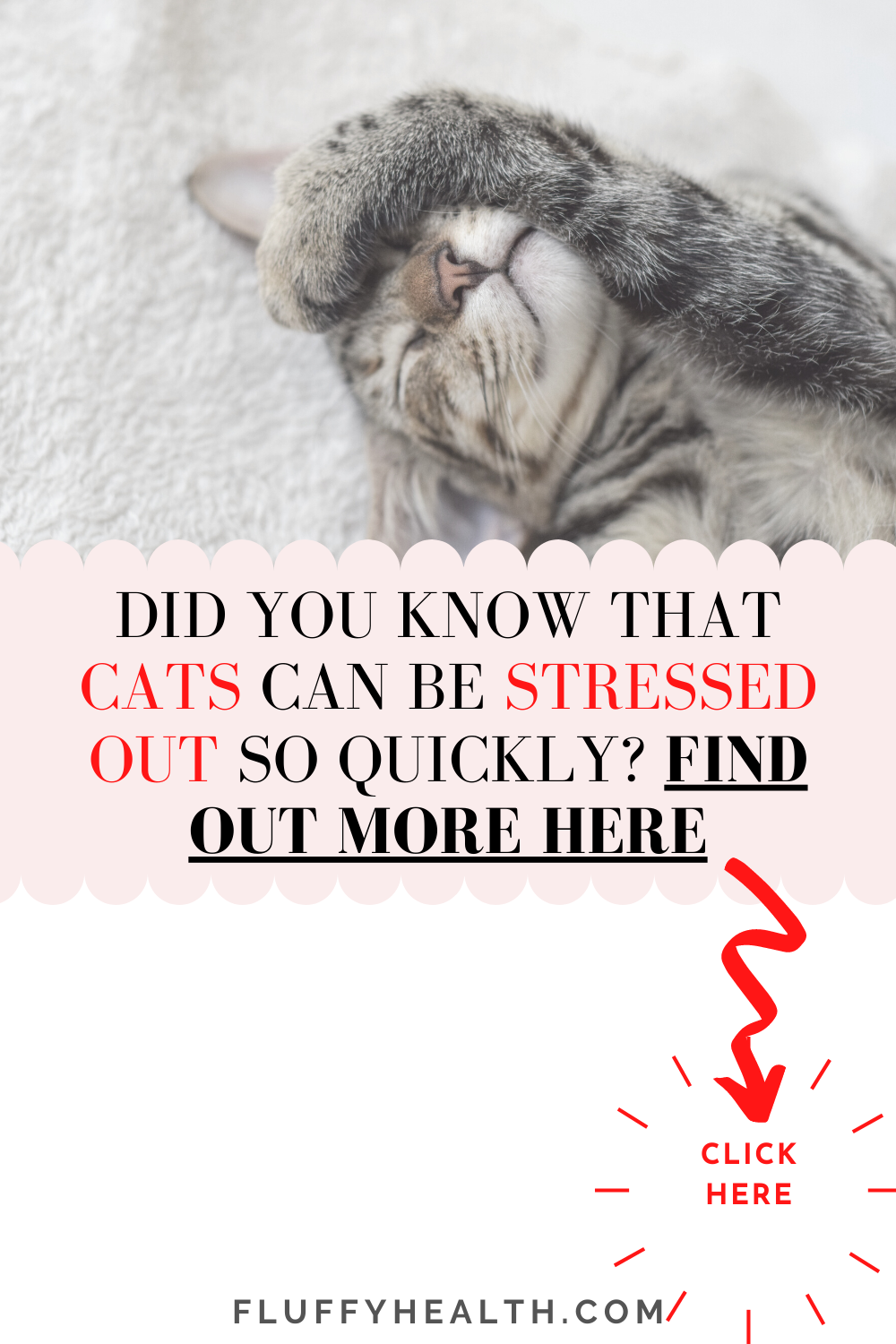 Stress-In-A-Cat