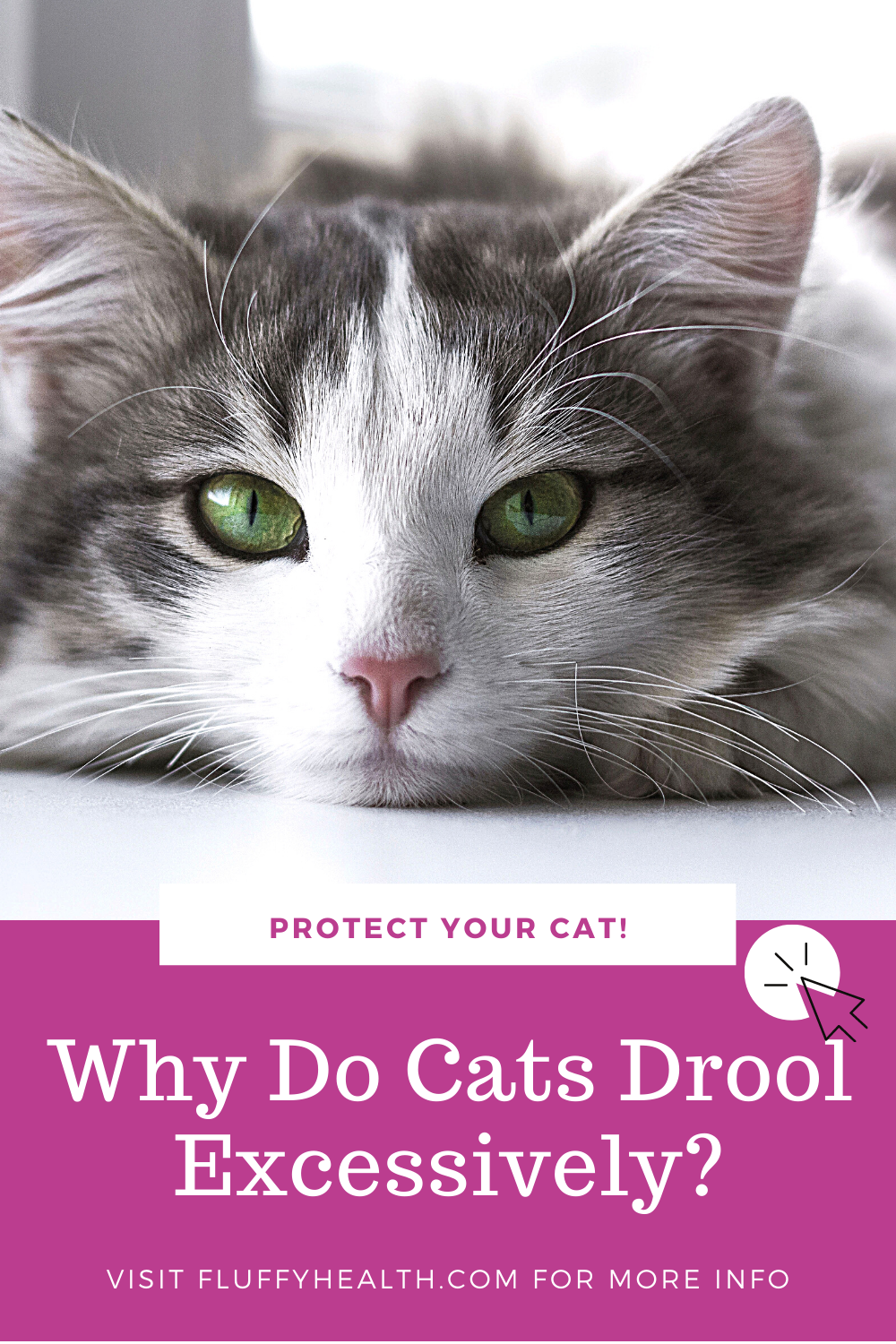 Why-Do-Cats-Drool-Excessively