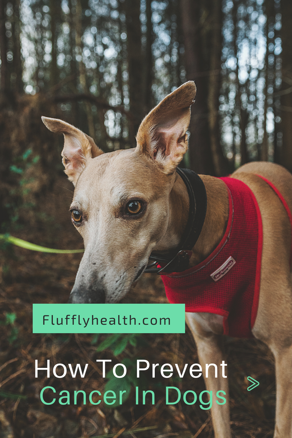 Symptoms-Of-Cancer-In-Dogs