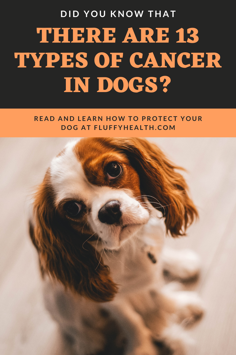 What-Is-Cancer-In-Dogs