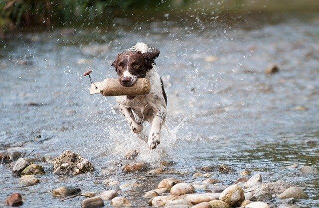 Symptoms-Of-Blastomycosis-In-Dogs