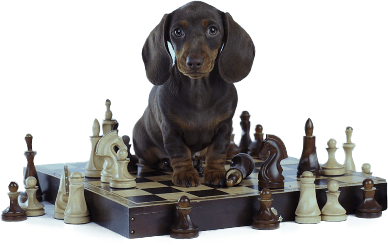 Brain-Training-For-Dogs-Review