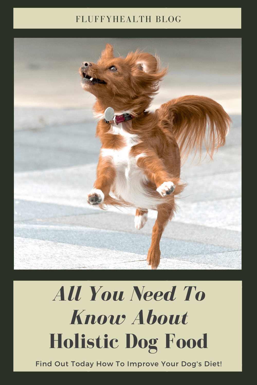 Best-Holistic-Dog-Food