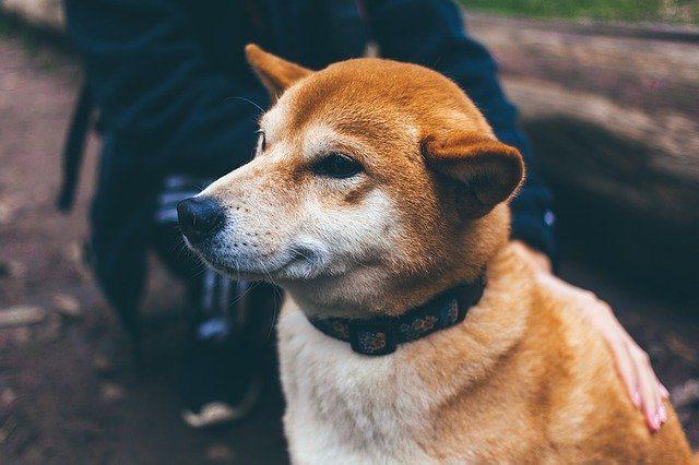 Holistic-Dog-Food
