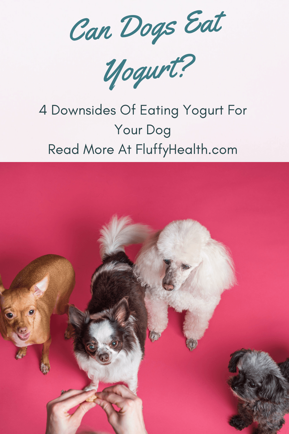 can-dogs-eat-yogurt