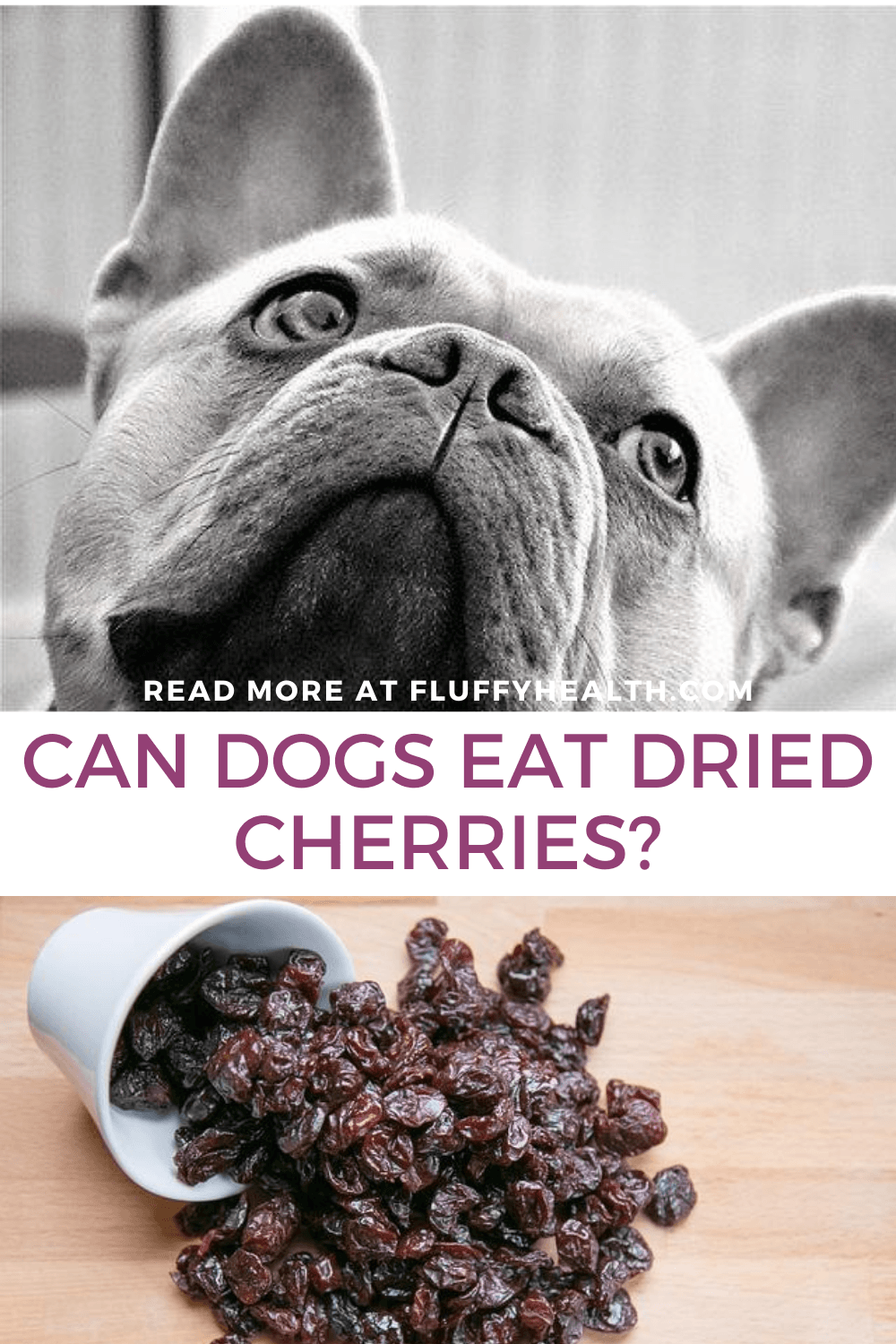 can-dogs-eat-dried-cherries