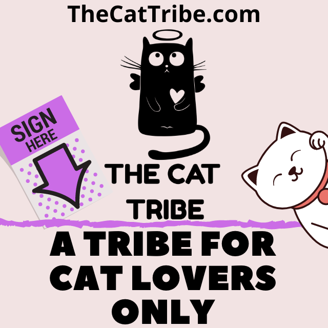 The-Cat-Tribe