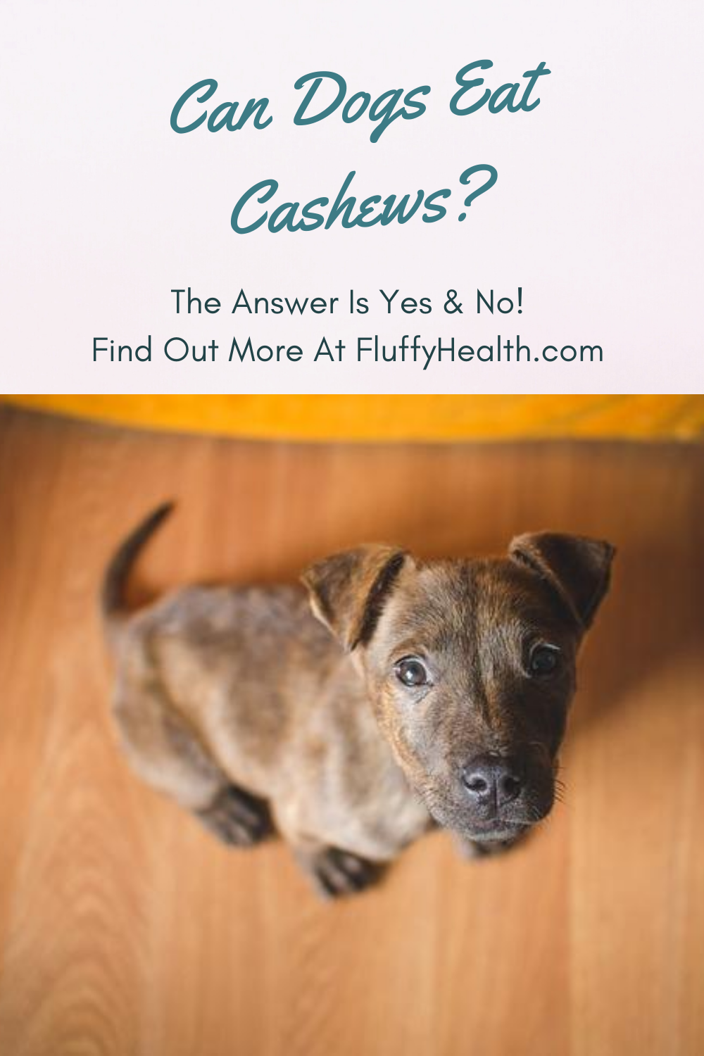 can-dogs-eat-cashews