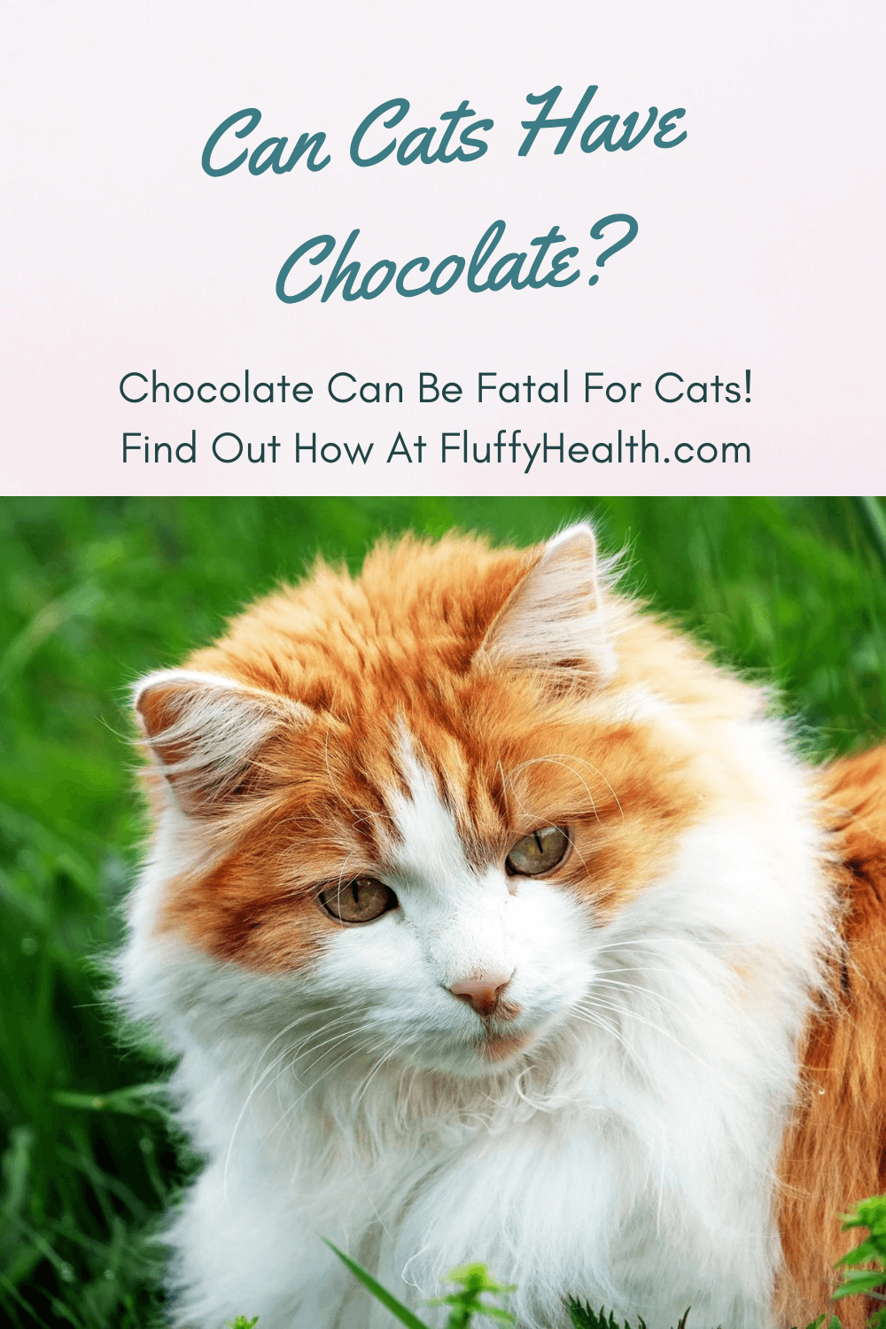 can-cats-have-chocolate