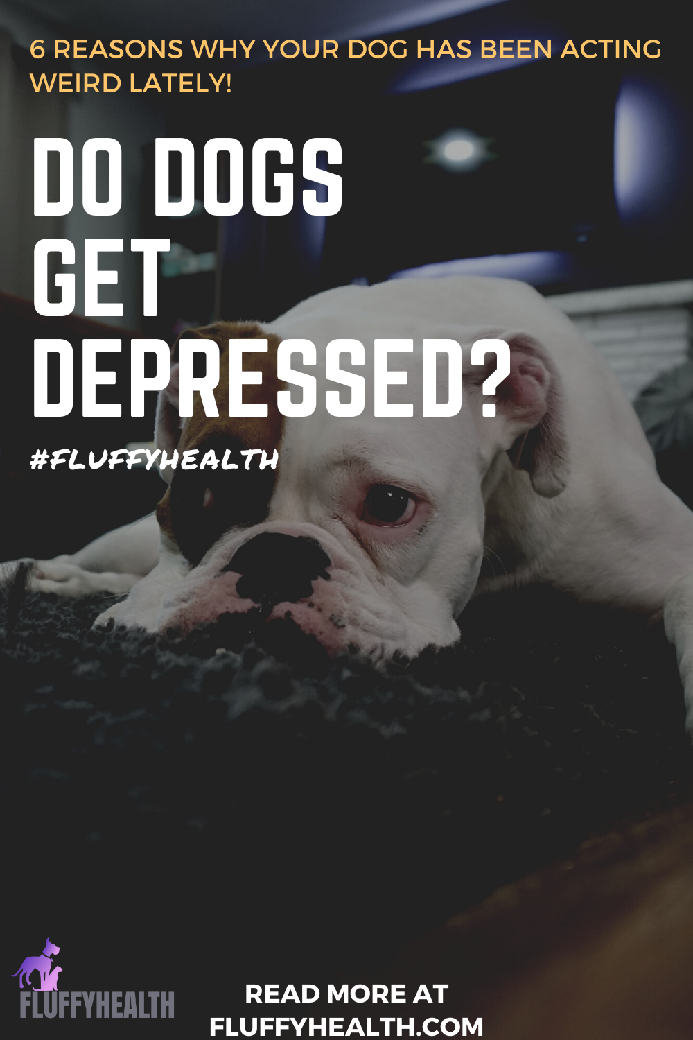 do-dogs-get-depressed
