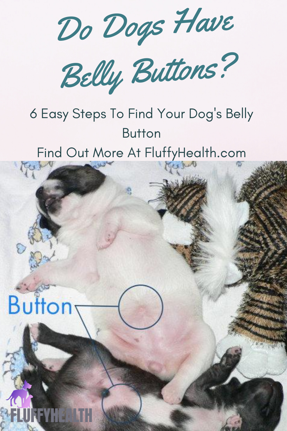 do-dogs-have-belly-buttons