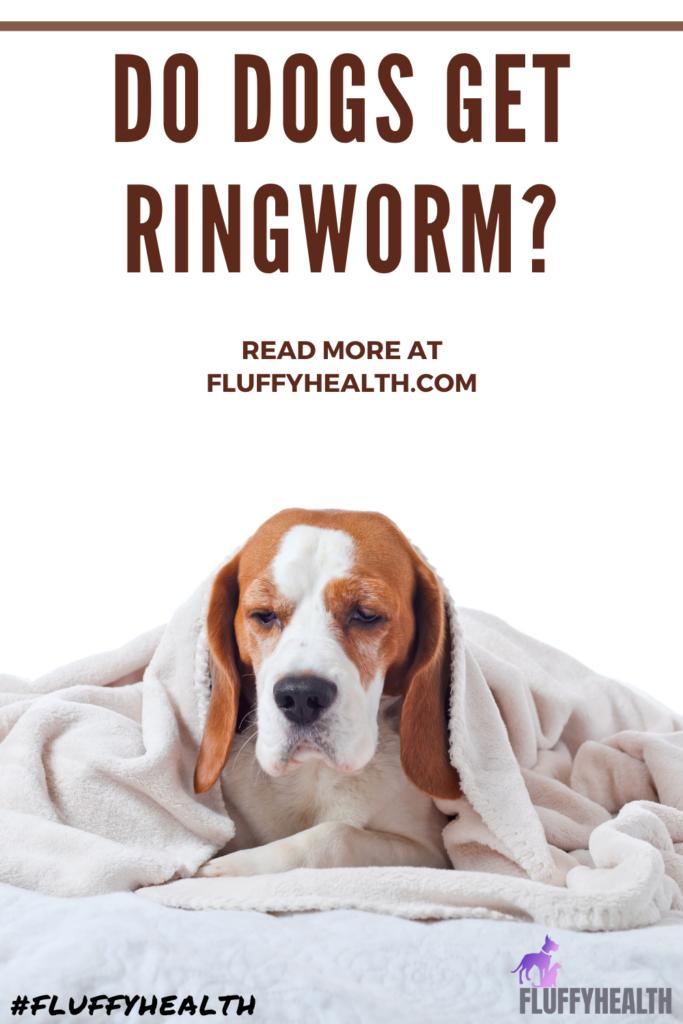 do-dogs-get-ringworm