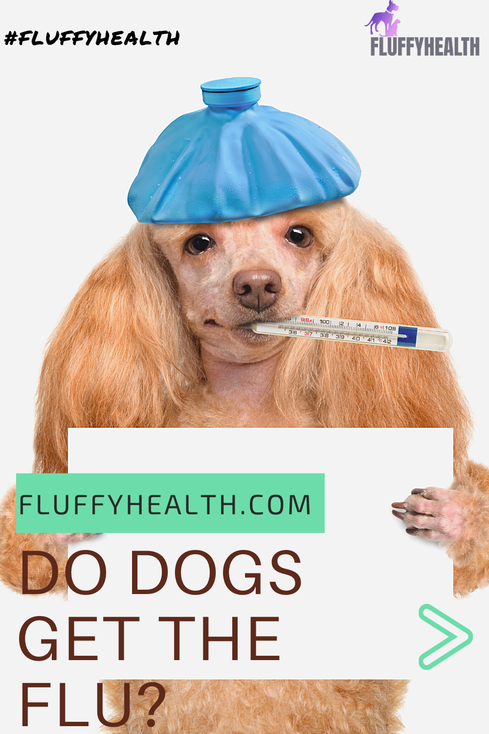 do-dogs-get-the-flu