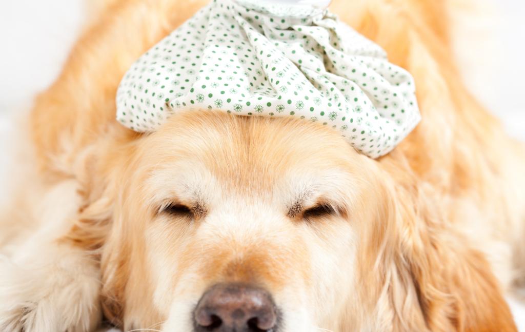 do-dogs-get-the-flu