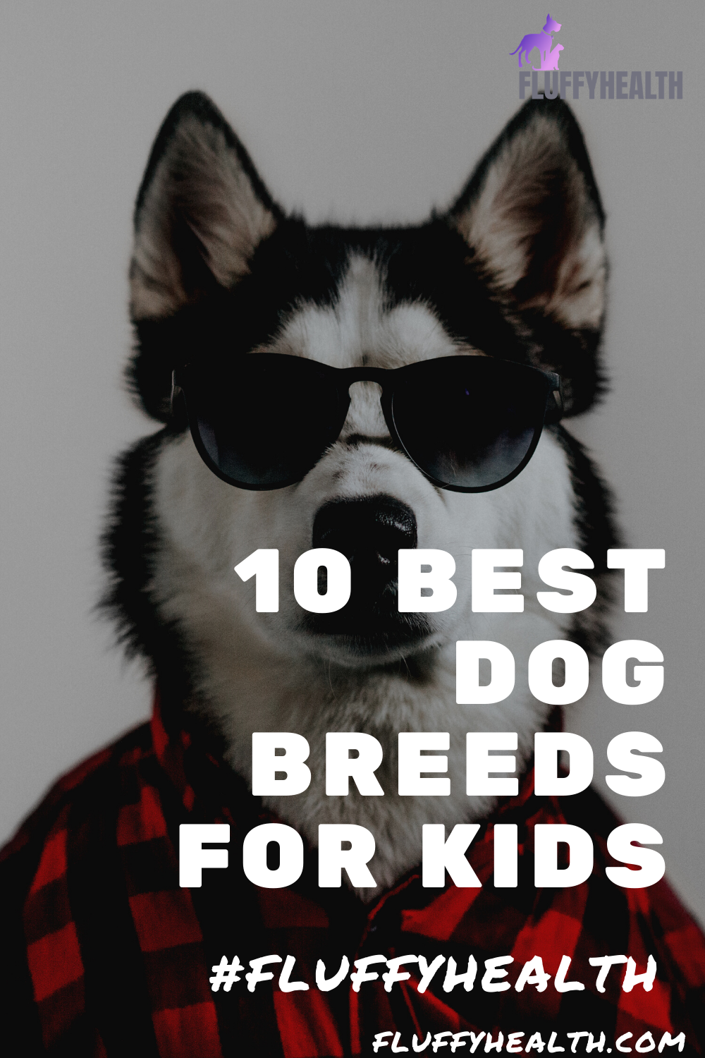 10-best-dog-breeds-for-kids
