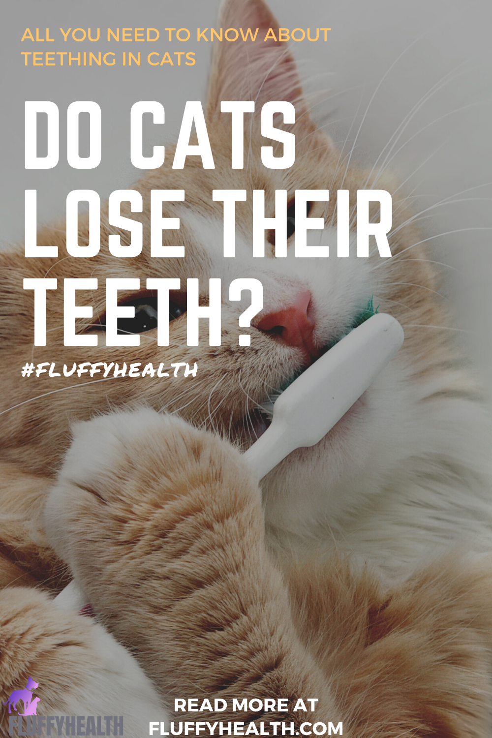 do-cats-lose-their-teeth