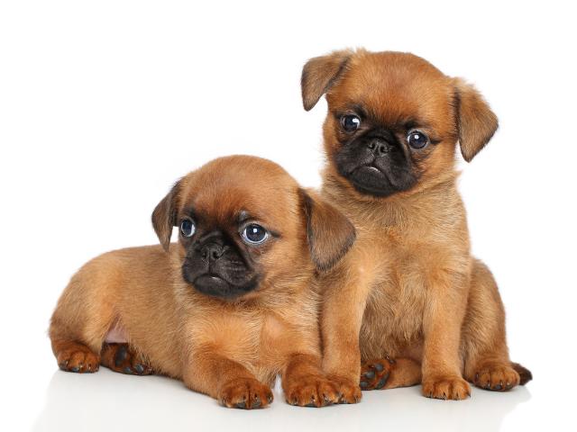 10-best-dog-breeds-for-kids