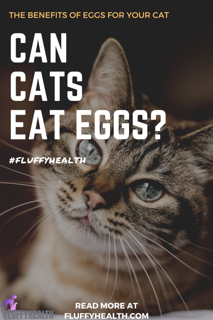 can-cats-eat-eggs