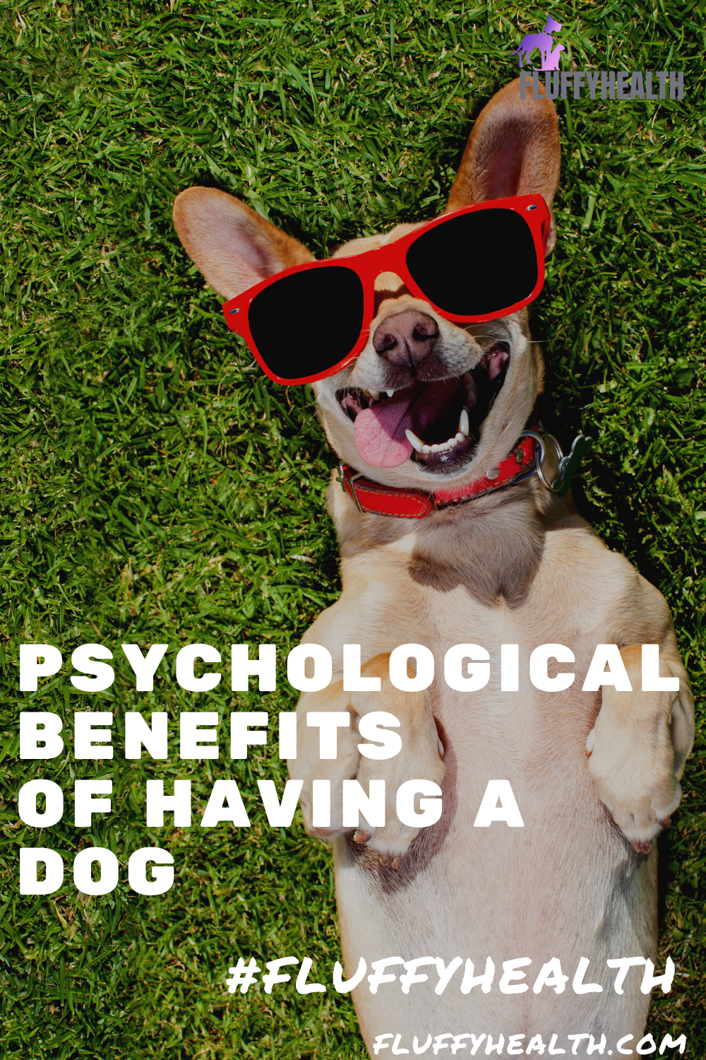 psychological-benefits-of-having-a-dog