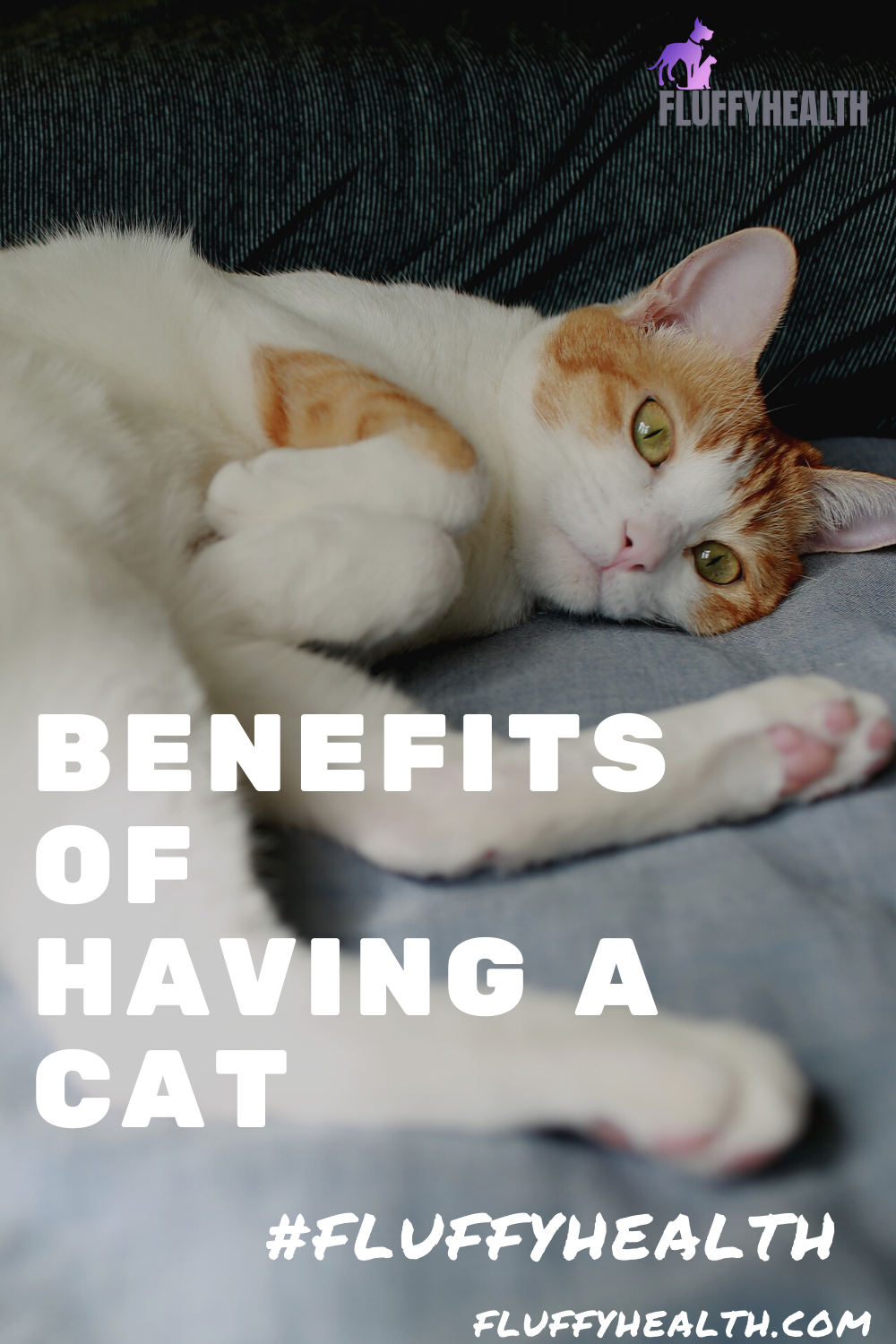 benefits-of-having-a-cat