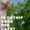 Is Catnip Good For Cats? 4 Amazing Ways To Use Catnip You Probably Didn't Know