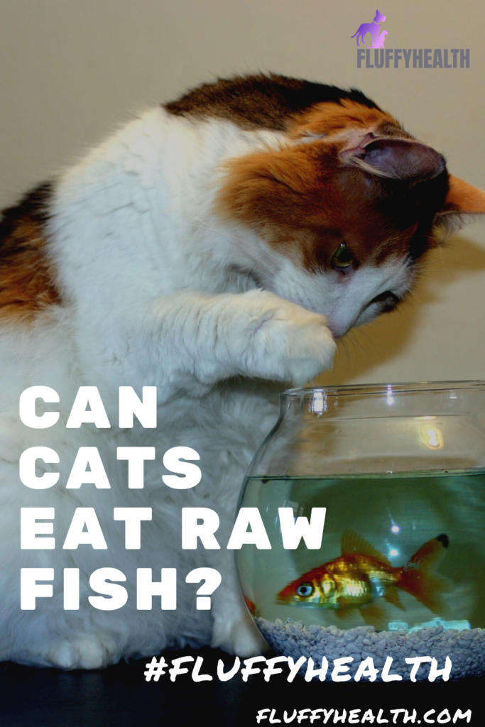 can-cats-eat-raw-fish