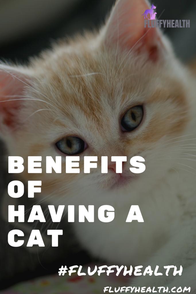 benefits-of-having-a-cat