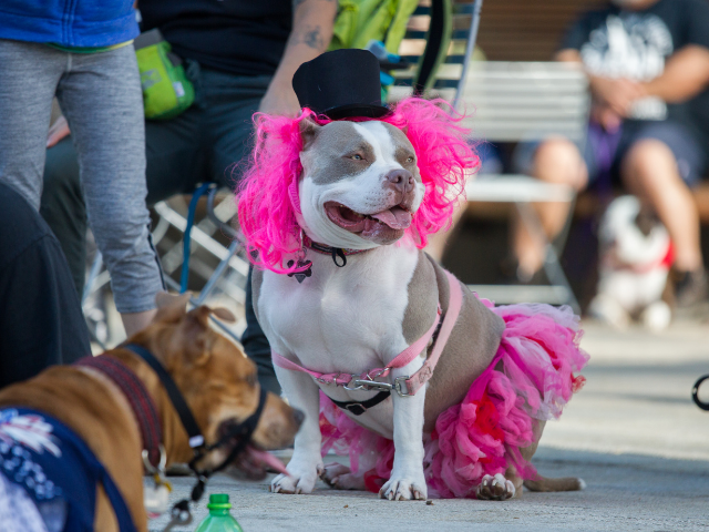 top-10-most-loyal-dog-breeds