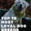 Top 10 Most Loyal Dog Breeds