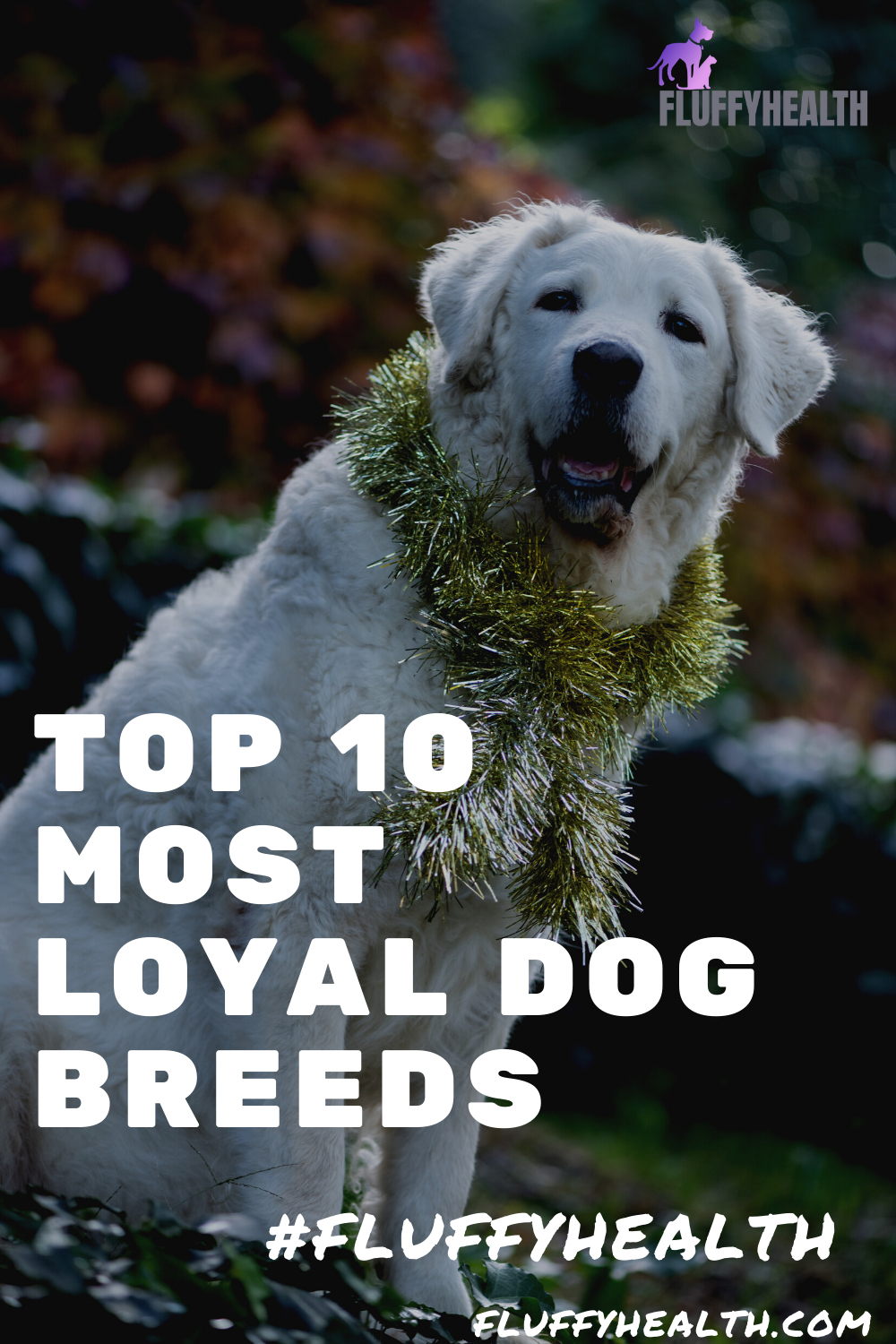 top-10-most-loyal-dog-breeds