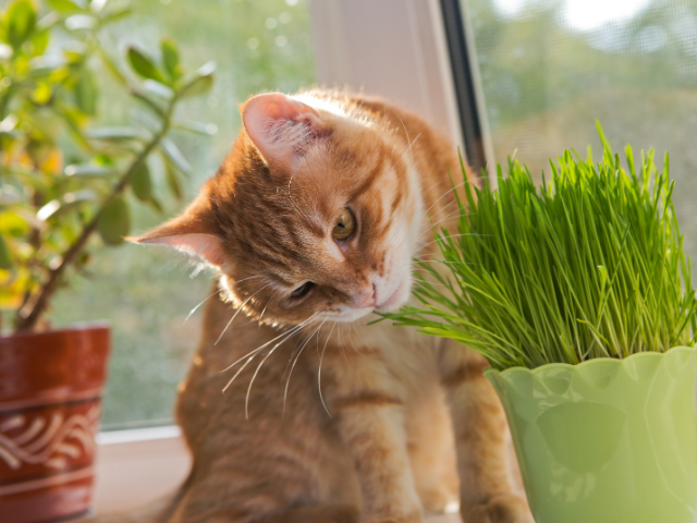 is-catnip-good-for-cats