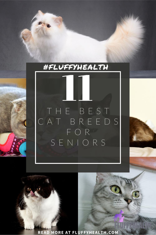 best-cat-breeds-for-seniors