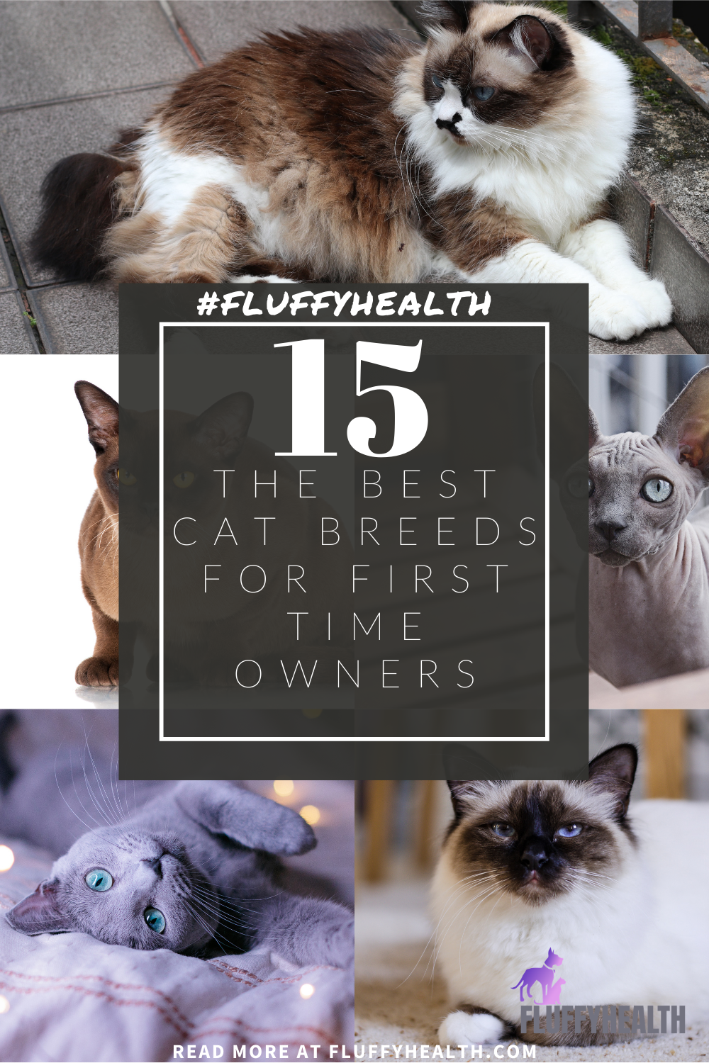 best-cat-breeds-for-first-time-owners