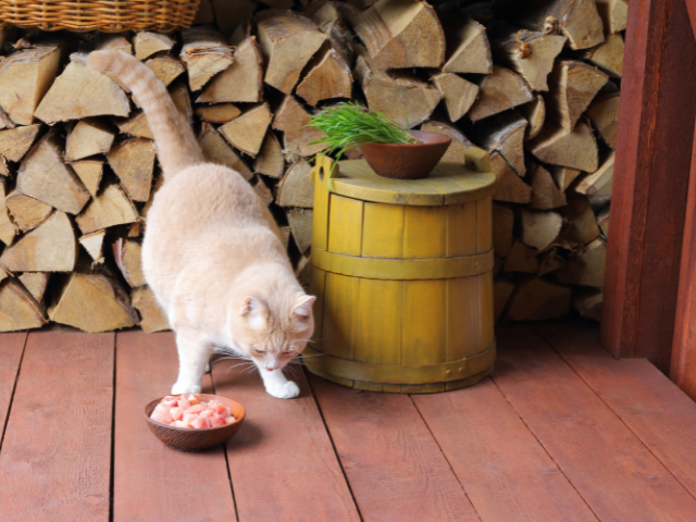 can-cats-eat-raw-meat